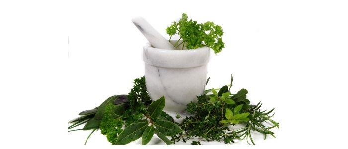 گیاهان دارویی  گیاهان دارویی که میتوان در منزل پرورش داد  وبلاگ  D8 A8 D9 86 D8 B1