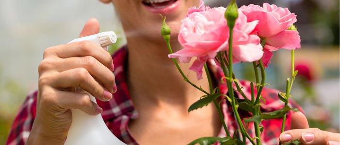 نکاتی در مورد نگهداری هرچه بهتر گل های شاخه بریده flower spray  وبلاگ flower spray