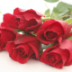 رایحه درمانی (Aromatherapy) با گیاهان rose flower 80x80