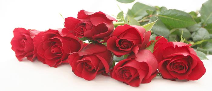 آموزش پرورش گل رز در سیب زمینی rose flower  وبلاگ rose flower