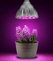 تاثیر نور لامپ بر رشد گیاهان 1sdfgdfghx