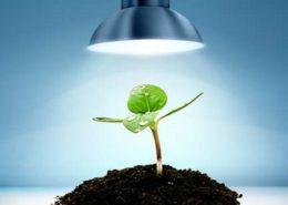تاثیر نور لامپ بر رشد گیاهان Grow Lamps Market 260x185 گل و گیاه خانگی گل و گیاه خانگی Grow Lamps Market 260x185