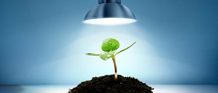 تاثیر نور لامپ بر رشد گیاهان Grow Lamps Market  وبلاگ Grow Lamps Market