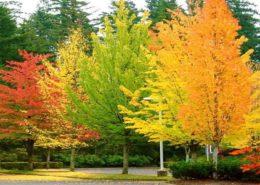 علت تغییر رنگ برگها در پاییز autumm 260x185 گل و گیاه خانگی گل و گیاه خانگی autumm 260x185