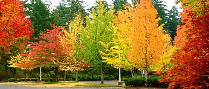 علت تغییر رنگ برگها در پاییز autumm