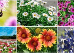 معرفی گل های فصلی 2528d0f6fe52a59bb9b28a94cc6c6c83 260x185 گل و گیاه خانگی گل و گیاه خانگی 2528d0f6fe52a59bb9b28a94cc6c6c83 260x185