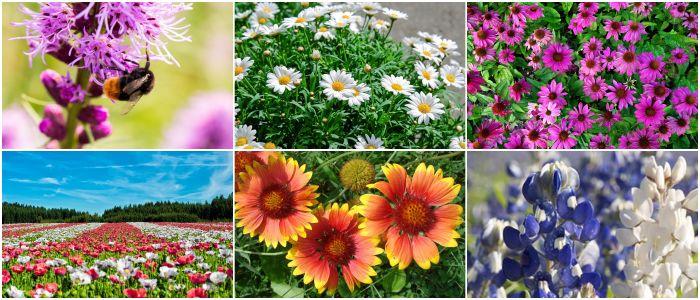 معرفی گل های فصلی 2528d0f6fe52a59bb9b28a94cc6c6c83