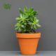 آئونیوم  آئونیوم – Aeonium Aeonium plant 003 80x80