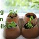 معرفی گل های فصلی GWC 640x300 eggshells 80x80