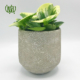 قاشقی قاشقی قاشقی (پپرومیا) – Peperomia Peperomia magnoliifolia plant 002 80x80