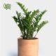 زاموفیلیا زامیفولیا زامیفولیا (زاموفیلیا) – Zamiifolia Zamioculcas Zamiifolia plant 005 80x80