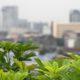 فنگ شویی گیاهان و تاثیر استفاده گیاه در محیط منزل و محل کار pthomeandgarden Tips For Growing Vegetables On Your Roof Albert Mondor 700x300 80x80