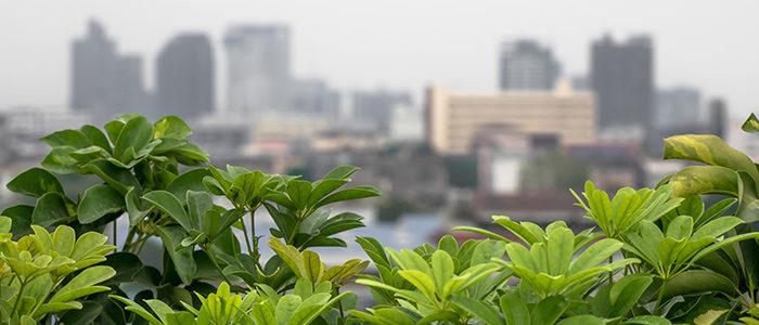 بام سبز چیست pthomeandgarden Tips For Growing Vegetables On Your Roof Albert Mondor 700x300  وبلاگ pthomeandgarden Tips For Growing Vegetables On Your Roof Albert Mondor 700x300