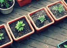 معرفی گل های فصلی container garden utah 700x300 260x185 گل و گیاه خانگی گل و گیاه خانگی container garden utah 700x300 260x185