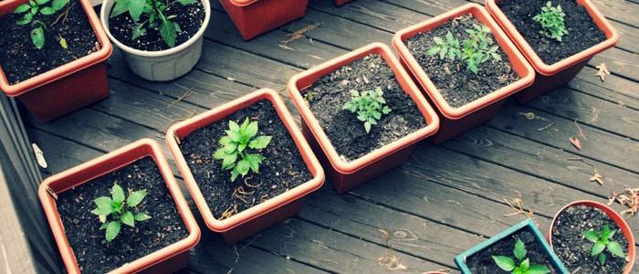 روش های موثر برای مبارزه با آفات گل و گیاه خانگی container garden utah 700x300