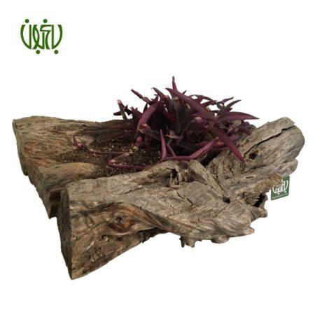 گلدان چوبی  گلدان چوبی 14-70 Plant wood pet 2 5 450x450