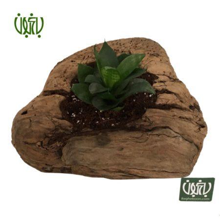 گلدان چوبی  گلدان چوبی 13-70 Plant wood pet 3 3 450x450 گل و گیاه خانگی گل و گیاه خانگی Plant wood pet 3 3 450x450
