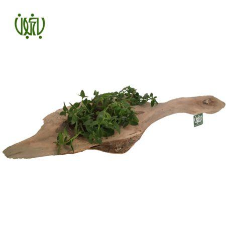 گلدان چوبی  گلدان چوبی 11-70 Plant wood pet 4 5 450x450