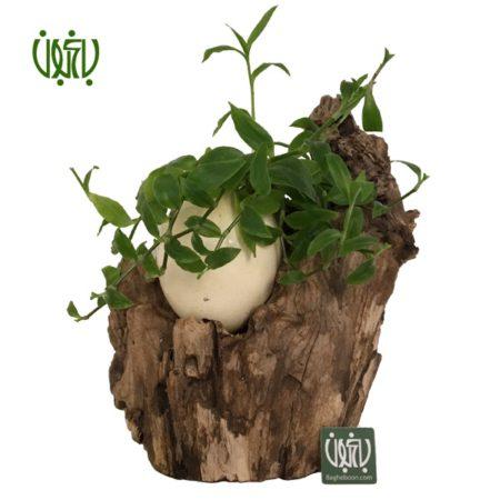 گلدان چوبی  گلدان چوبی 12-70 Plant wood pet 5 1 450x450