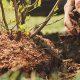 روش های موثر برای مبارزه با آفات گل و گیاه خانگی pthomeandgarden planting tree 80x80