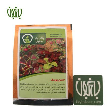 بذر  بذر حسن یوسف Hasan yousef flower sperm 01 450x450
