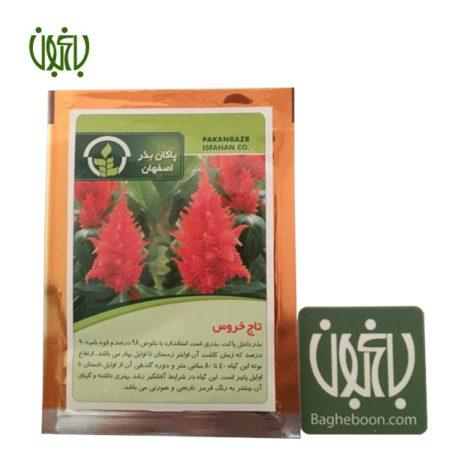 بذر  بذر گل تاج خروس Rooster flower sperm 01 450x450