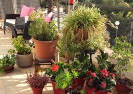 sunlight of plants  چگونه نور گیاه خانگی را تنظیم کنیم؟ 20161201 151858 700x300 260x185 گل و گیاه خانگی گل و گیاه خانگی 20161201 151858 700x300 260x185