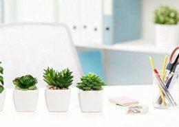 چگونه نور گیاه خانگی را تنظیم کنیم؟ 6ec8bdf4c389a48e360170e2fda40f7e 260x185 گل و گیاه خانگی گل و گیاه خانگی 6ec8bdf4c389a48e360170e2fda40f7e 260x185