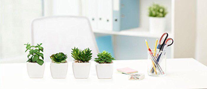 فنگ شویی گیاهان و تاثیر استفاده گیاه در محیط منزل و محل کار 6ec8bdf4c389a48e360170e2fda40f7e  وبلاگ 6ec8bdf4c389a48e360170e2fda40f7e
