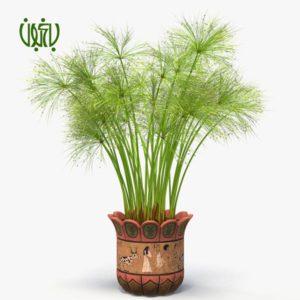 نخل مرداب گیاهان فضای باز گیاهان فضای باز Cyperus alternifolius plant 03 300x300 گیاهان فضای باز گیاهان فضای باز Cyperus alternifolius plant 03 300x300