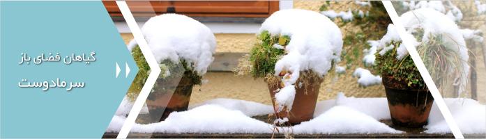 گیاهان فضای باز سرمادوست