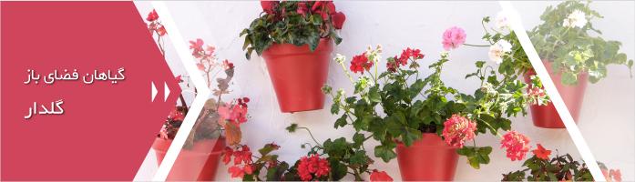 گیاهان فضای باز گلدار