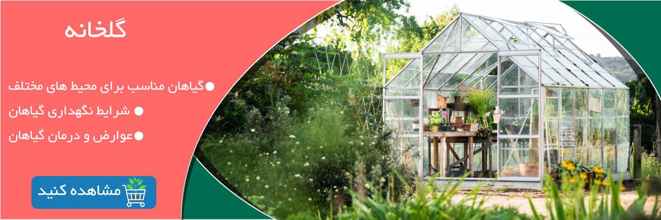 گلخانه: معرفی گیاهان گل و گیاه خانگی گل و گیاه خانگی Bagheboon Golkhaneh