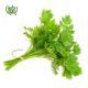 جعفری  بذر گل سلوی یا مریم parsley sperm 01 80x80