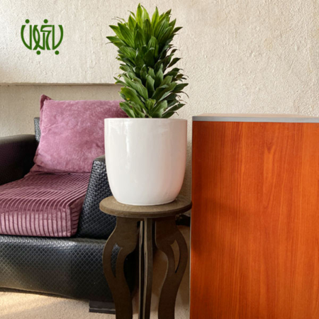 گلدان هدیه  گلدان هدیه دراسنا کامپکتا طرح 1 Dracaena compacta ceramic Vase 1 0 450x450