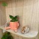 گلدان هدیه  گلدان هدیه سانسوریا پاکوتاه طرح1 Sansevieria Trifasciata hahnii 2 0 80x80
