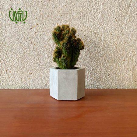 گلدان هدیه  گلدان هدیه کاکتوس طرح 1 Cactus 1 0 450x450