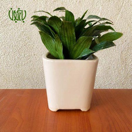 گلدان هدیه  گلدان هدیه دراسنا کامپکتا طرح4 Dracaena compacta ceramic Vase 4 0 450x450