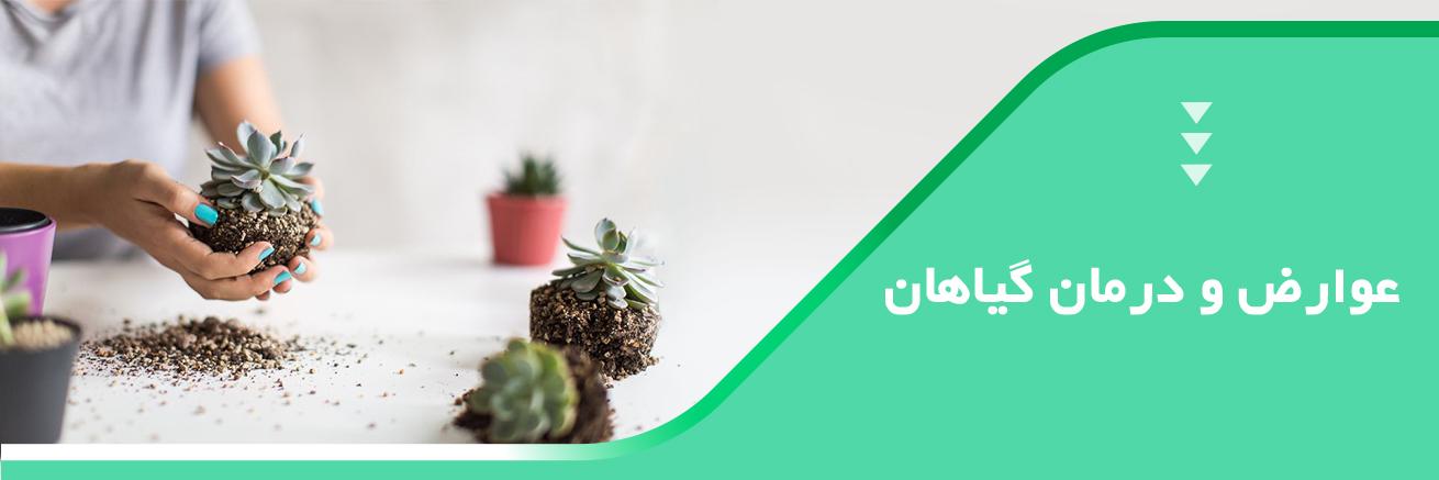 عوارض و درمان گیاهان