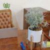 گلدان هدیه اسطوخدوس