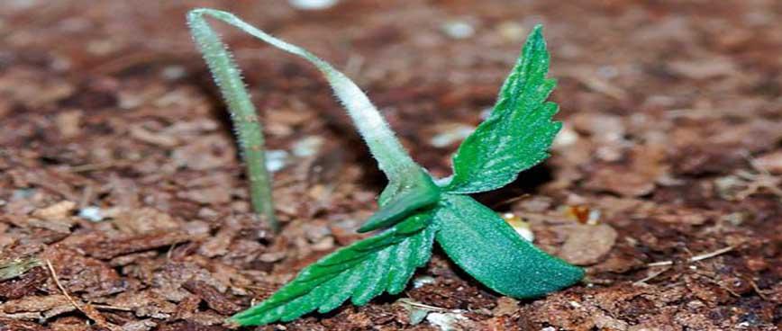 عوامل مرگ گیاهان