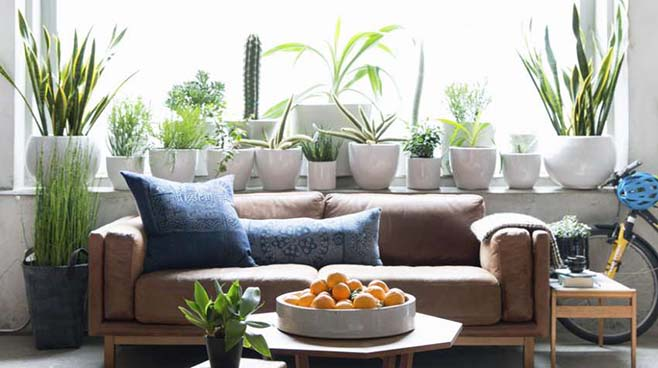 گیاه مناسب خانه کوچک