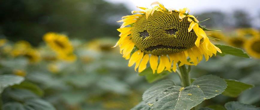 مشکلات عمومی گیاهان