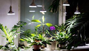 نور و دمای مناسب گیاهان