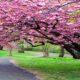 نگهداری گیاهان در بهار