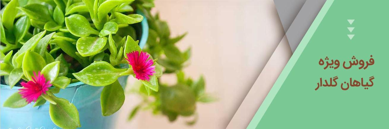 باغبون-فروش ویژه گیاهان گلدار